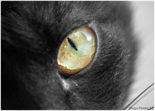 Eye of the Cat