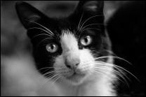 Oh My Cat!!