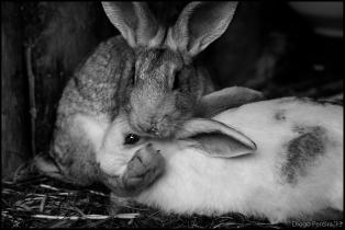 Kung Fu Rabbit 2