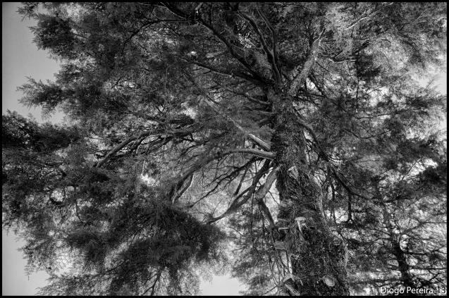 Beneath The Burning Tree