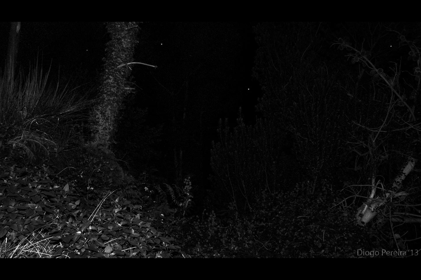 blaire witch project Blair witch est un film réalisé par adam wingard avec brandon scott, callie hernandez synopsis : james et un groupe d'amis décident de s'aventurer dans la forêt de black hills dans le maryland, afin d'élucider les mystères autour de la disparition en 1994 de sa sœur, que beauc.