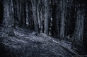 The Silence of the woods