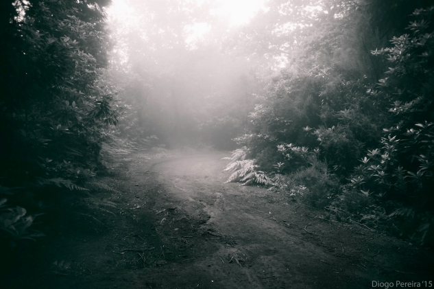 Into the woods, misty forest, fog, mountains and dirt roads