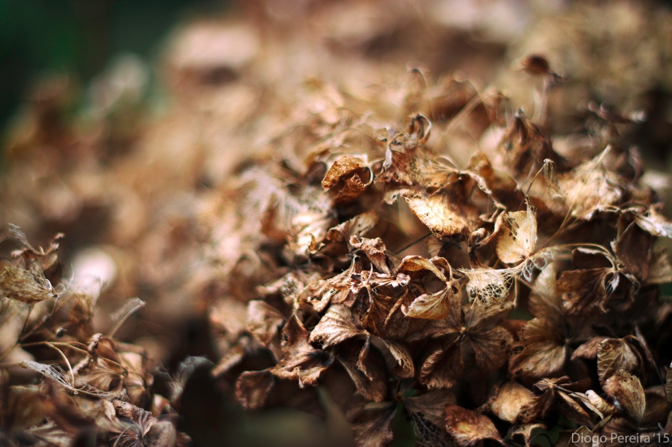 dried out flower