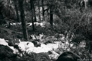 Walking In A Winter Wonderland snow