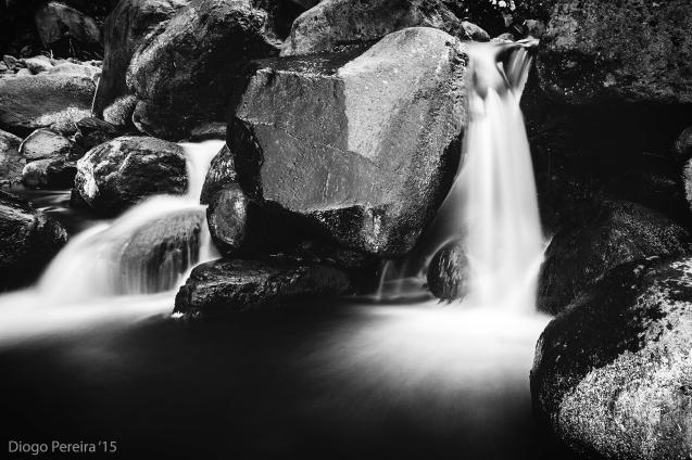 black stream madeira